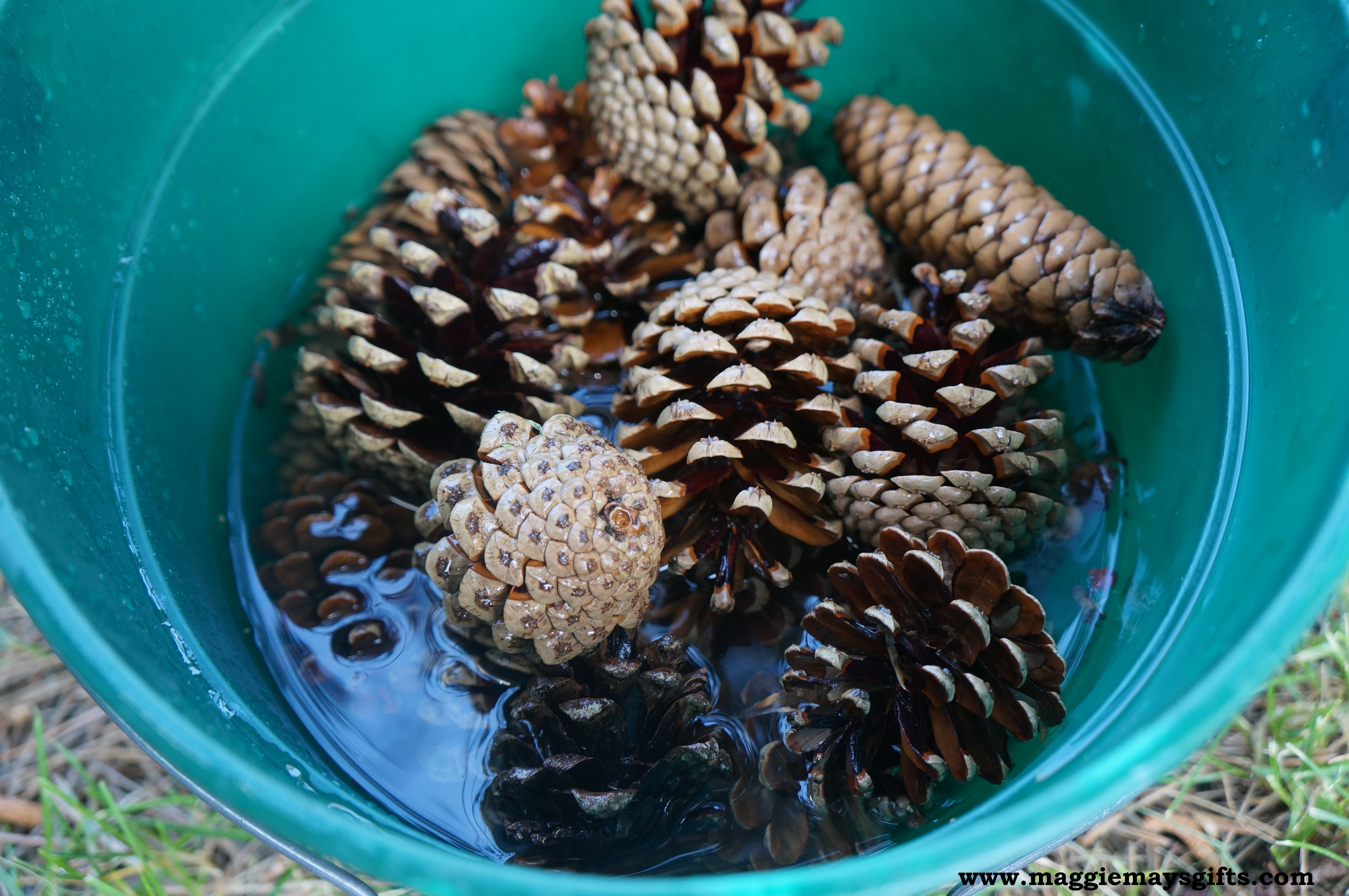 Pine cones for crafts - Pine Cone Holiday Crafts